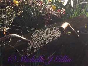 spider webs are one of my favourite things to photograph